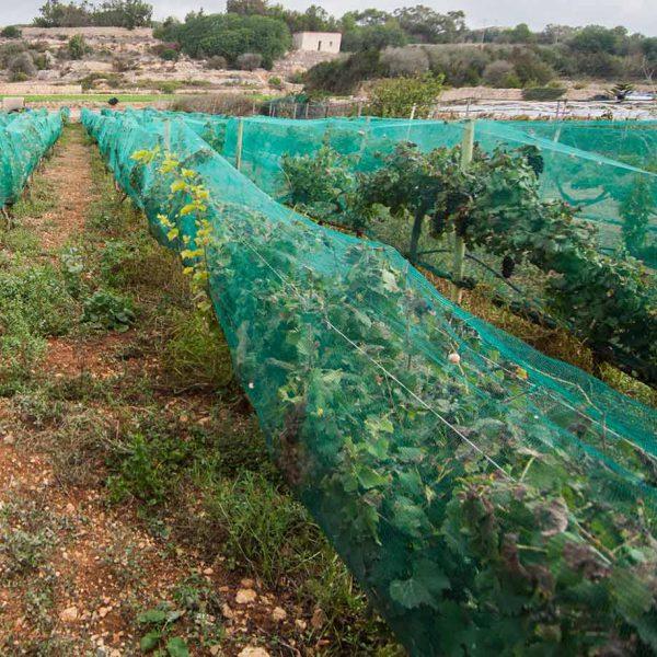 Things to do in Malta | Diar il-Bniet