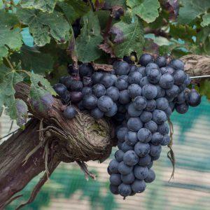 Fresh Produce | Diar il-Bniet